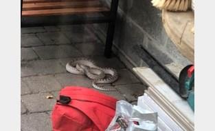 """Tom (40) vindt grote slang onder de barbecue: """"Ik hoorde een sissend geluid maar had me hier niet aan verwacht"""""""