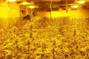 Cannabisboeren blijven nog maand langer in de cel