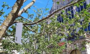 Tickets NTGent groeien letterlijk aan de bomen