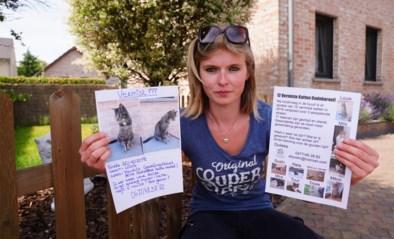 """Zoektocht naar kat Louis brengt Elly (25) op spoor van mysterie: """"12 katten verdwenen in straal van 100 meter, dat kan toch niet?"""""""