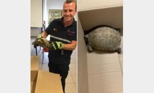 Verdwaalde schildpad brengt bezoek aan brandweerkazerne