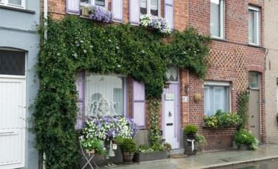 Straks geveltuinen, groenslingers en straattuinen in Zedelgem