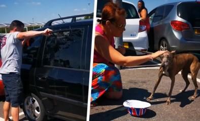 """Man slaat autoruit in om hond uit snikhete wagen te redden: """"Zat minstens een halfuur opgesloten"""""""