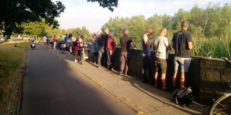"""Koppel bevers lokt veel spotters: """"Trek niet massaal naar Gentbrugge!"""""""