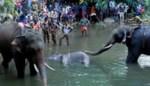 Indiërs vullen fruit met voetzoekers: zwangere olifant sterft