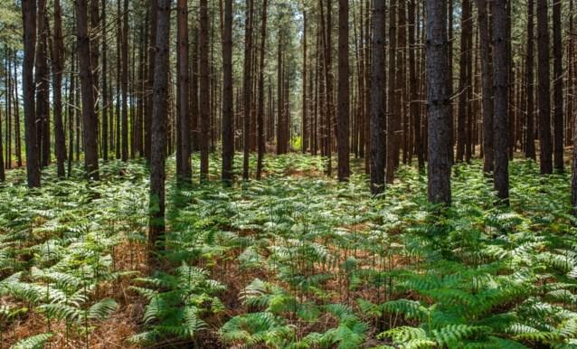 """Peeters en Demir weerleggen berichten over """"illegale boomkap"""" door Vlaamse overheid"""