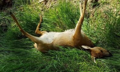Opnieuw ree door loslopende hond doodgebeten in natuurgebied