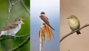 Ze weigeren hun snavel te houden, maar wat zeggen vogels eigenlijk voortdurend tegen elkaar?