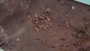 Menselijke beenderen gevonden bij graafwerken aan Sint-Rumolduskerk