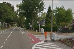Twee bomen sneuvelen bij heraanleg kruispunt Diestsesteenweg