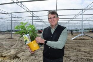 Oprins Plant bouwt nieuwe serres en verhuist productie naar Rijkevorsel