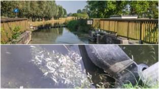 Kleine visjes sterven in Zwalmbeek door overloop zuiveringsstation