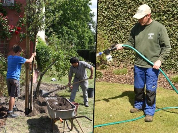 Maak je tuin gastvrij voor de regen: de groenman helpt jouw planten te recupereren van de droogte