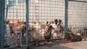 Ruim honderd verwaarloosde dieren in beslag genomen in Lessen