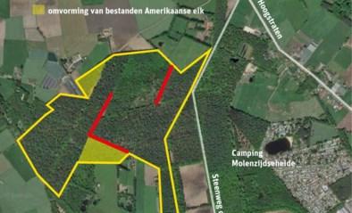Agentschap Natuur en Bos maakt gemengd bos van naaldbos in Merksplas-Kolonie