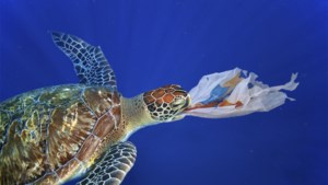 Plastic dat 20 jaar in zee lag vertoonde geen slijtage
