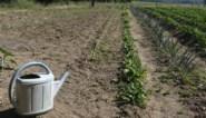 """Greenpeace België: """"Vandaag is Vlaanderen even droog als Zuid-Spanje. Roep de klimaatnoodtoestand uit"""""""
