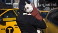 38 puppies dood aangetroffen op vliegtuig in Canada