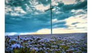 Vier bedrijven dienen samen dossier in voor 23 windturbines