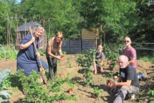 Buurttuin levert mooie oogst en versterkt sociale samenhang in Solariumwijk