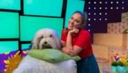 Nieuwe afleveringen van Samson & Marie eind september op Ketnet
