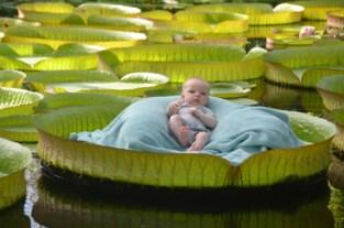 Aanschuiven voor idyllische fotoshoot op blad van reuzenwaterlelie