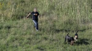 """Loslopende honden doden reekalfje voor de ogen van fotograaf: """"Dat schreeuwen. Ik krijg het niet meer uit mijn hoofd"""""""