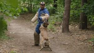 Staf Coppens vraagt: hou je hond aan de leiband