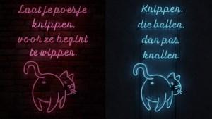 """Gaia lanceert campagne om katten te steriliseren: """"Laat je poesje knippen"""""""