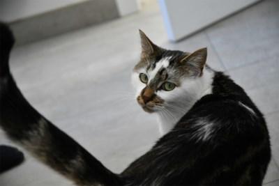 Dierenopvangcentrum Zemst staat vanaf 1 juli in voor zwerfkatten en gevonden dieren
