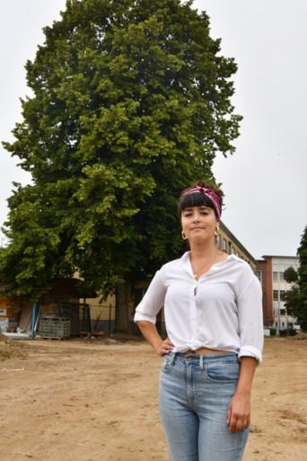 Geen toekomst voor monumentale lindeboom in Deurne-Expo, ondanks 4.444 handtekeningen