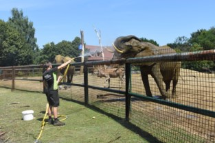Douches en waterijsjes bezorgen dieren Pakawi Park extra afkoeling