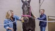 """Boeren verveeld dat dierenactiviste An Lemmens 'Boer zkt vrouw' presenteert: """"Het voelt verkeerd aan"""""""