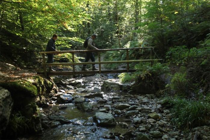 De mooiste wandelroutes van België: over watervalletjes en boomstambruggen op de enige bergrivier in ons land