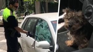 """Hond zit maar liefst vier uur opgesloten in wagen bij temperaturen tot 40 graden: """"Hij stond op het punt flauw te vallen"""""""
