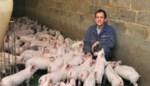 """Na elf jaar procederen en vier geweigerde aanvragen zakt moed varkensboer Gert in de schoenen: """"Straks staat die stal er nog niet als ik op pensioen ga"""""""