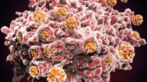 Antilichamen coronavirus blijven minder lang in bloed dan gedacht, maar ons lichaam heeft nog een belangrijk wapen