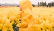 Vijftien kleurrijke regenjassen om die lokale buien te trotseren