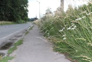 Pepingen ziet vroeger grasmaaien langs fietspaden niet zitten