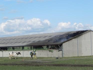 Koeien gered bij uitslaande stalbrand