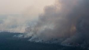 Nog meer branden in Braziliaans Amazonewoud dan vorig jaar