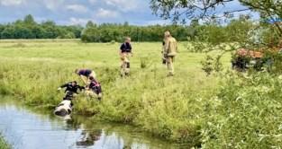 Brandweer redt koe uit Baarbeek