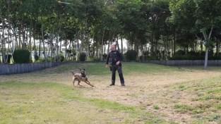 """Rouwende hondenbegeleider Björn werkt aan terugkeer met Mechelse herder Diesel: """"Hij heeft mijn hart al gestolen"""""""