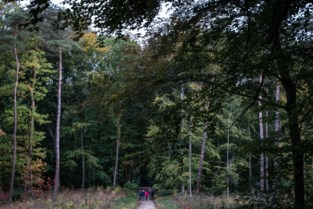 Zeldzame boommarter waargenomen in Heverleebos