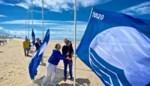 """Kustgemeenten hijsen de vlag, met dank aan proper zeewater en strand: """"We mogen heel fier zijn"""""""