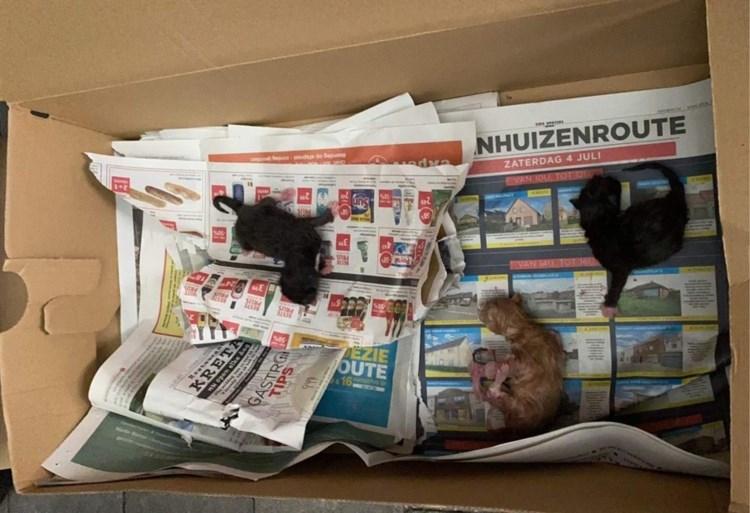 Pasgeboren kittens gedumpt en klaargezet voor vuilkar