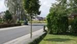 Bomen worden hier voortaan met kennis van zaken gesnoeid, of toch alvast die van de gemeente