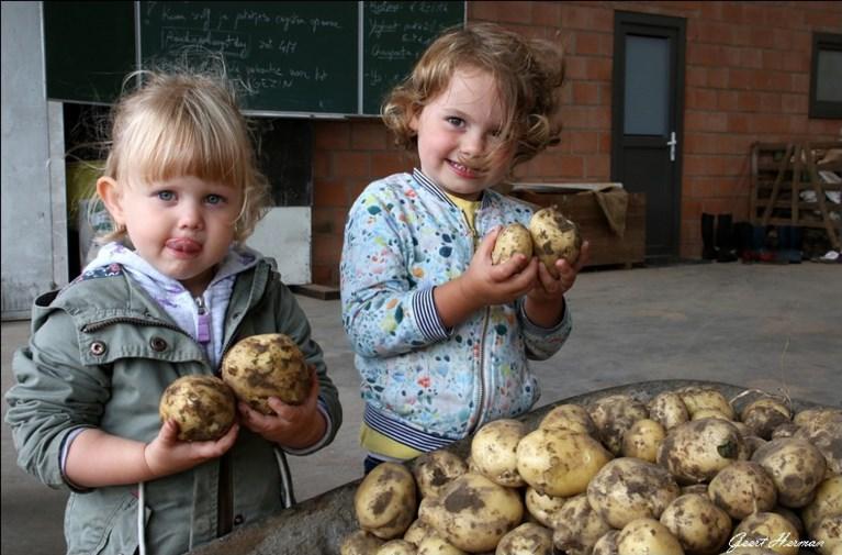 Op de Petrushoeve zijn ze wél al aan de nieuwe patatjes