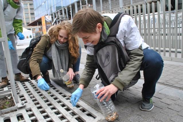 Gents MilieuFront start tweede Peuken Cleanup in Gent