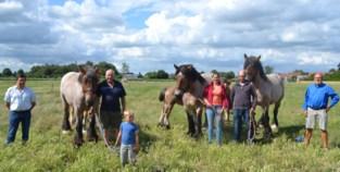 """Ook 'lightversie' van paardenhappening niet mogelijk: """"We kunnen onze jonge dieren zelfs niet opleiden"""""""